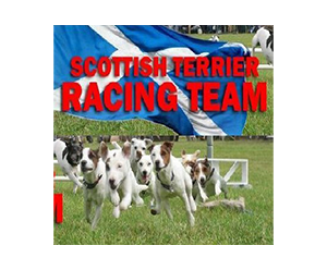 scottish-racing-terriers