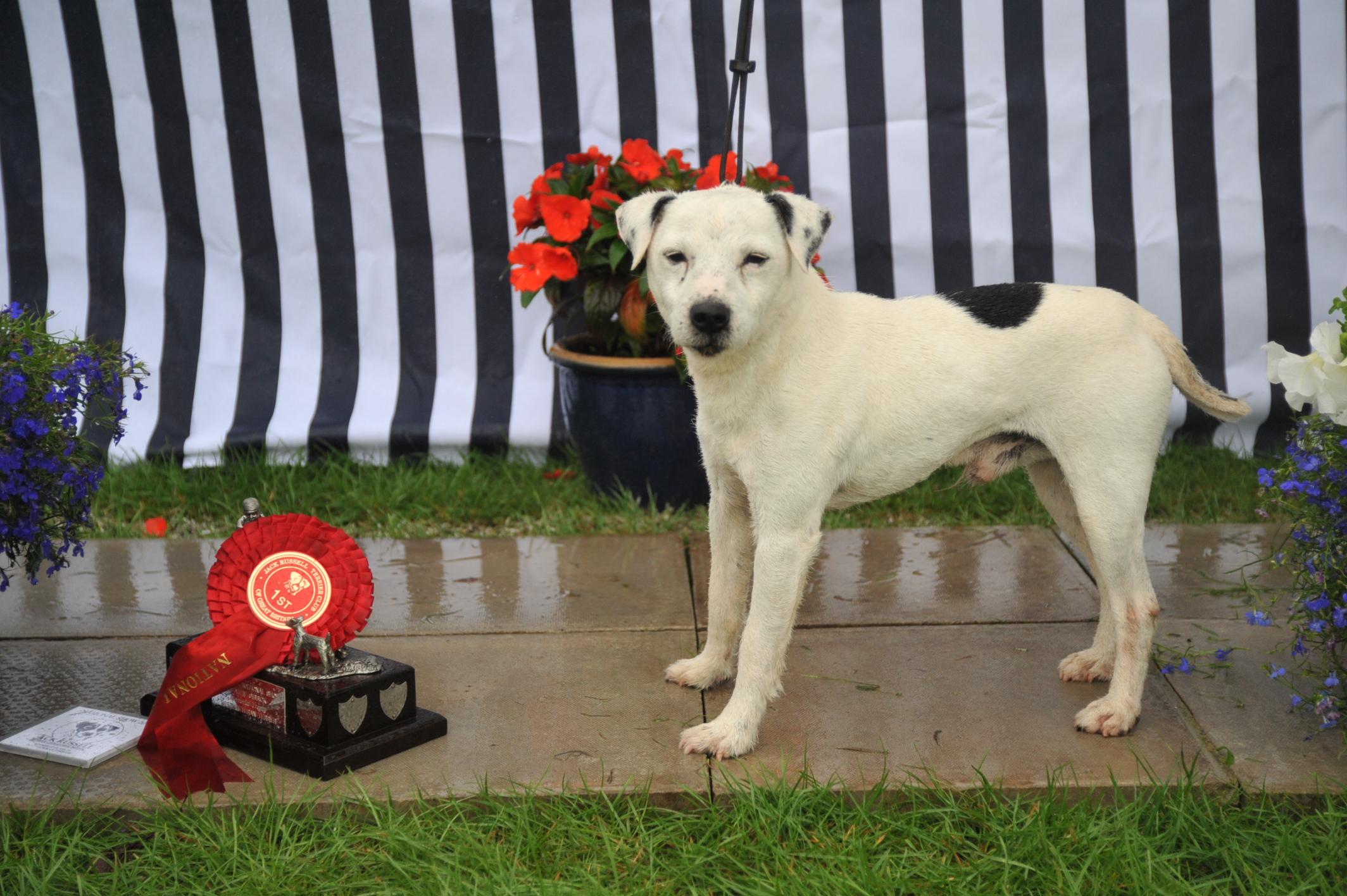 Class 21 Veteran Terrier | Foxgrove Murphy - S. Parkin
