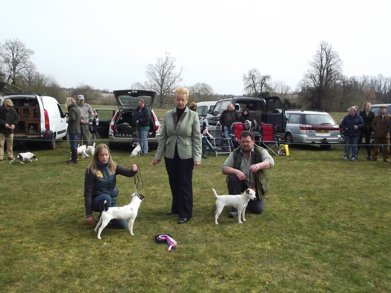 Champion Puppy and Reserve - Champion - M&B. Smith - Spike Reserve - L&N Hooper - Nicklyn Tangle