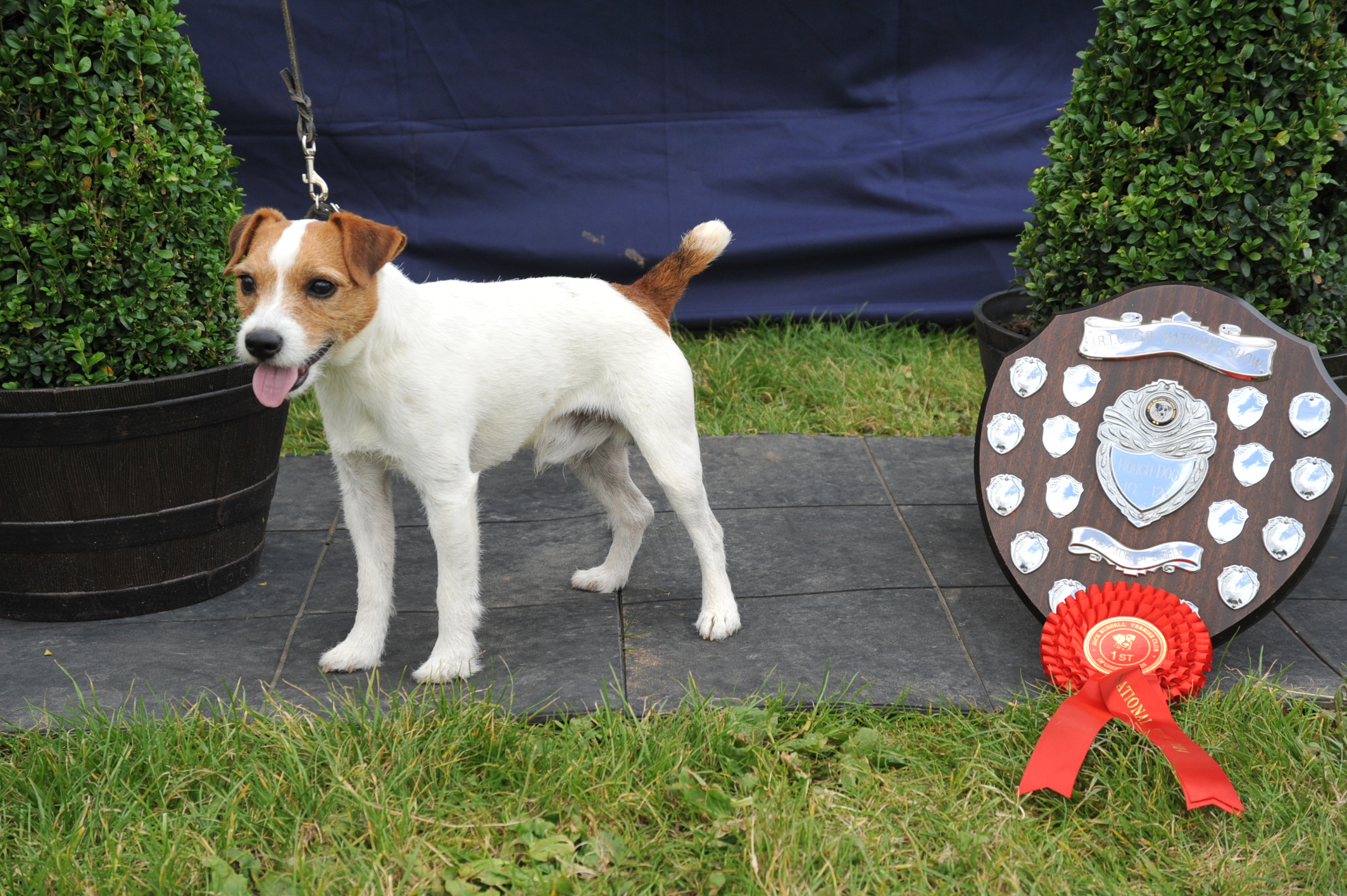"Class 4 10""-12.5"" Rough/Broken Coated Dog over 1 year old Meynell Tarka - Sian Headech"