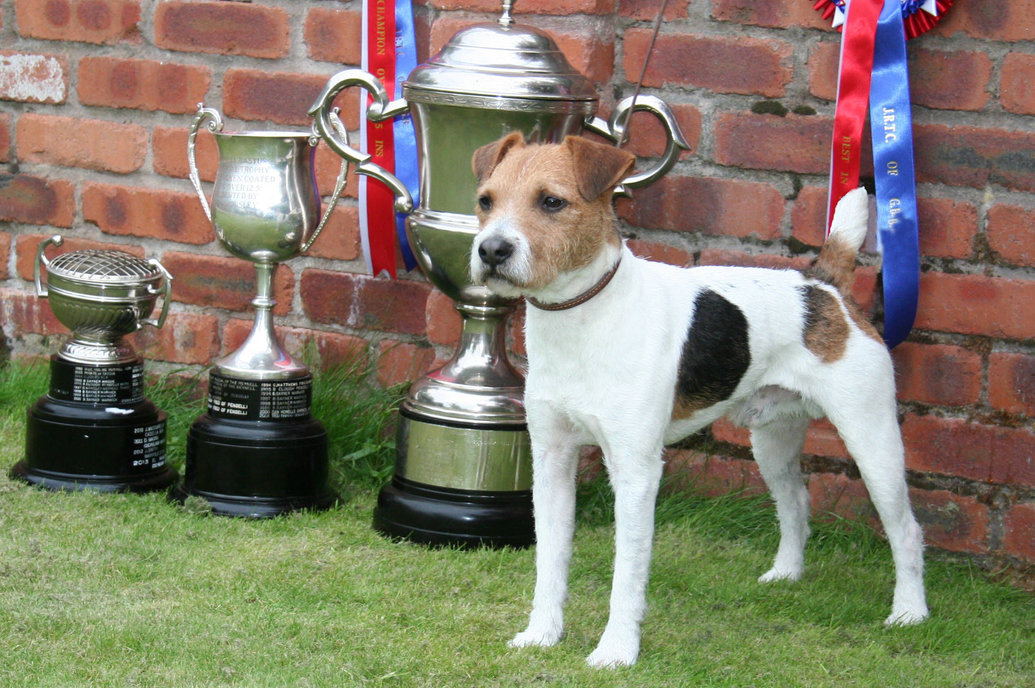 Class 30 JRTCGB 2014 National Show Champion Meynell-Sundance Max - G. Mousley & A. Makela