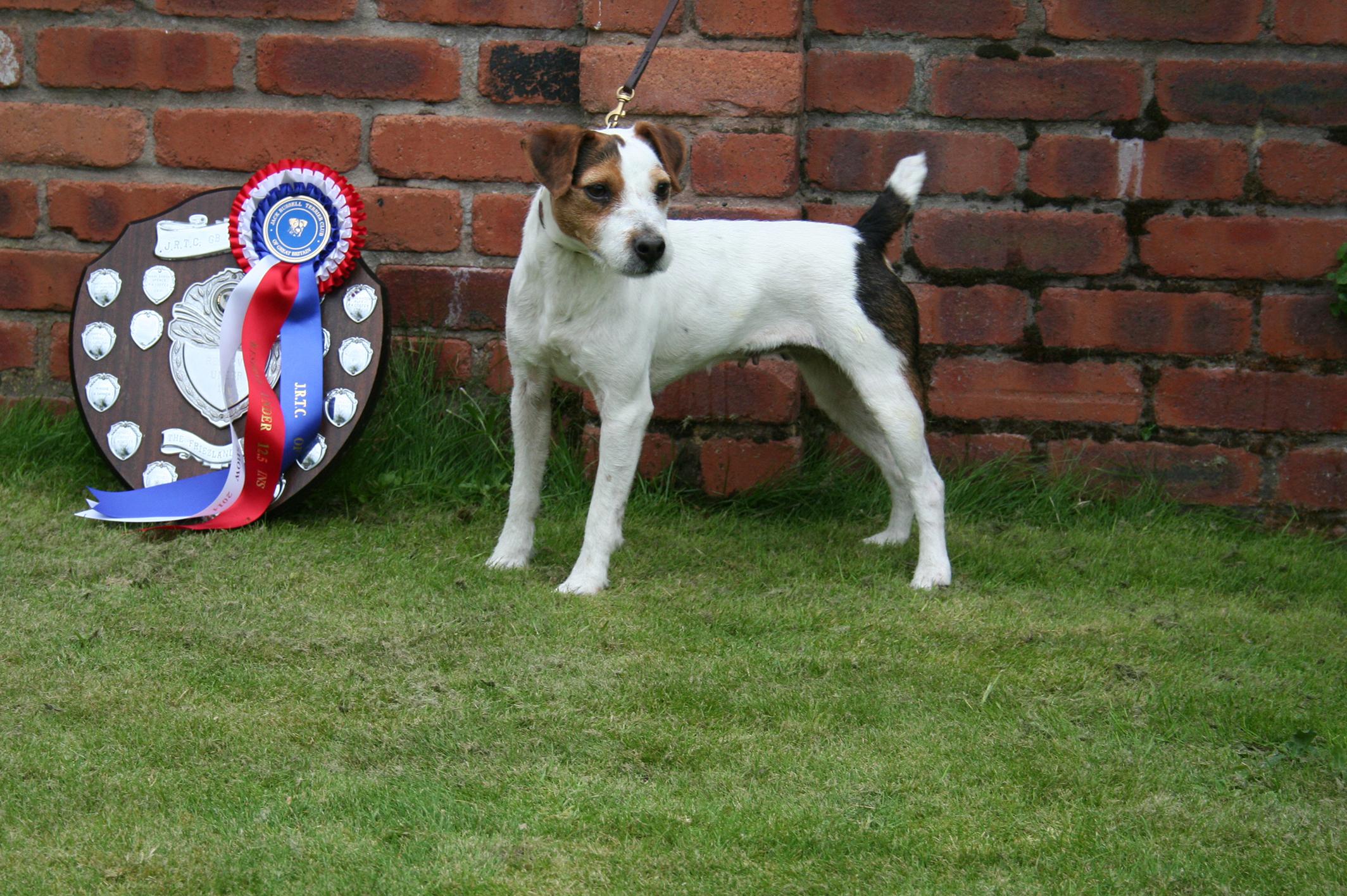 "Class 28 10""-12.5"" Jack Russell Terrier Reserve Meynell-Sundance Waxy - G. Mousley & A. Makela"