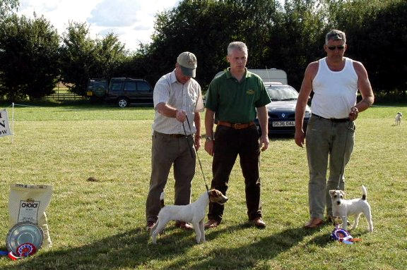 Best Puppy |  (left) Brockton Alamo & Reserve Mr Davidson's Teasel