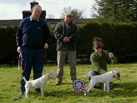 Best Jack Russell Puppy (right) and Reserve | Steph Allen's Allen's Toad & Reserve (left) Neil Everley's Cologne Milly