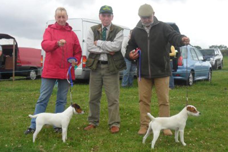 Northern Region Summer Show 2011 | Best Russell Puppy (right) & Reserve