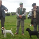 Northern Region Summer Show 2011 | Best Russell Puppy (right) & Reserve | Best Terrier & Reserve