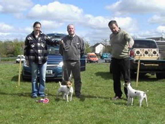 Best Jack Russell (left) and Reserve |  Jack Russell, Ben owned by K. McCarthy (left) and Reserve, Penny owned by D. Morham