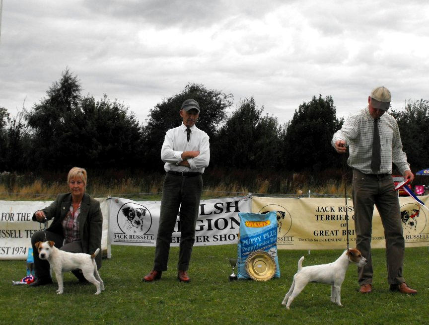 Class 27. Best Puppy | Steve Parkin - Foxgrove Ruby (right) & Reserve Jane Massarella - Cadella Bracken (left)