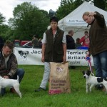 Champion & Res Jack Russell