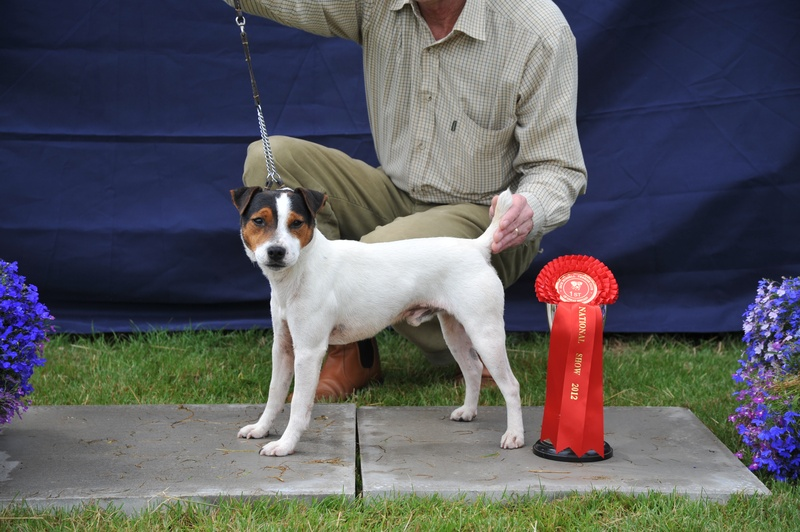 "Class 3 10-12 1/2"" Smooth Coated Dog over 1 year 