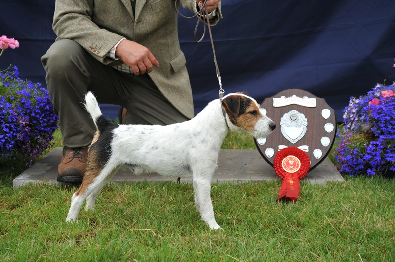 "Class 4 10""-12 1/2"" Rough/Broken Coated Dog over 1 year 