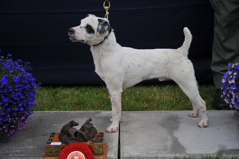 "Class 7 12 1/2""-15"" Smooth Coated Dog over 1 year 