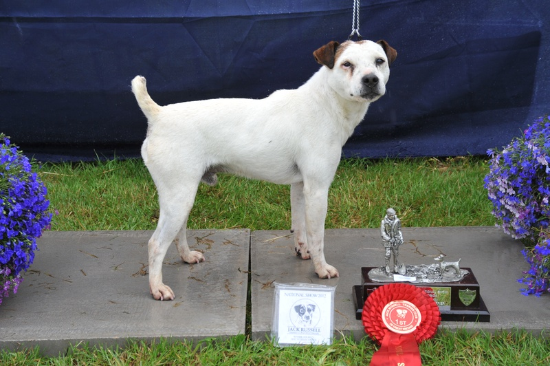 Class 21 Veteran terrier (terrier must be 7 years old or over) | Montrave Spud - D. Davidson