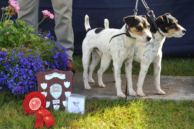 Class 23 Best matched couple of terriers | Foxgrove Bracken & Foxgrove Rocky - S. Parkin