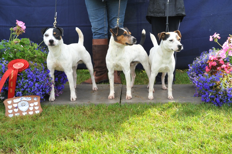 Class 24 Progeny (Sire or Dam - son or daughter ? grandson or granddaughter) Entries must consist of 3 different terriers | Rushill Clyde & Co. - M&E Hulme