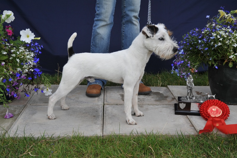 "Class 1 Dog Pup 10""-12 1/2"" Smooth, Rough/Broken (6-12 months) 