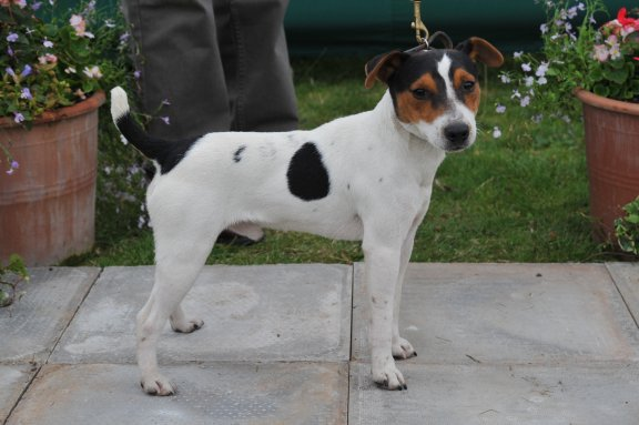 Class 1. Dog Pup (6-12 months) 10-12.5 ins | Ted Harries - Brockton Sport