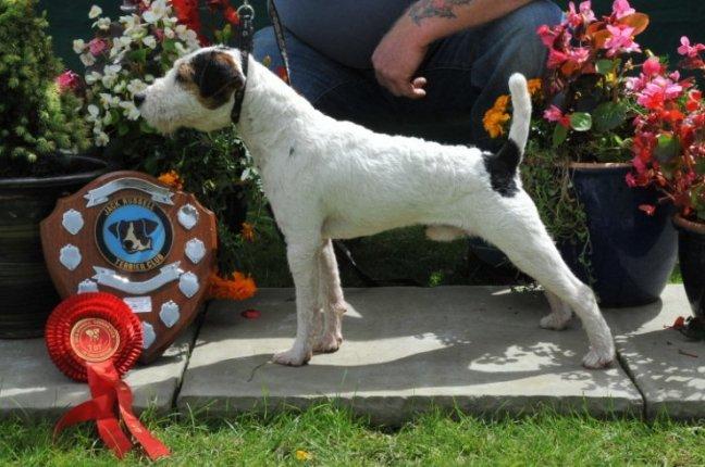 Class 1. 10-12 Dog Puppy (6-12 months) | D. Mackin - Cuchulann Badger
