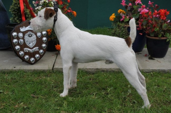 Class 04 Dog Puppy (6-12 months) | D. Mackin - Cuchulann Irish Rebel