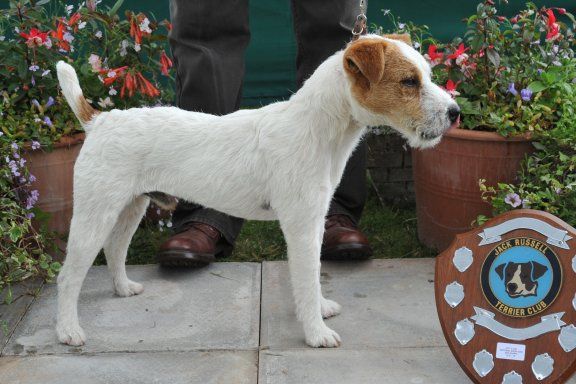 Class 5. Dog Pup (6-12 months) 12.5 - 15 ins | Jane Massarella - Cadella Bracken