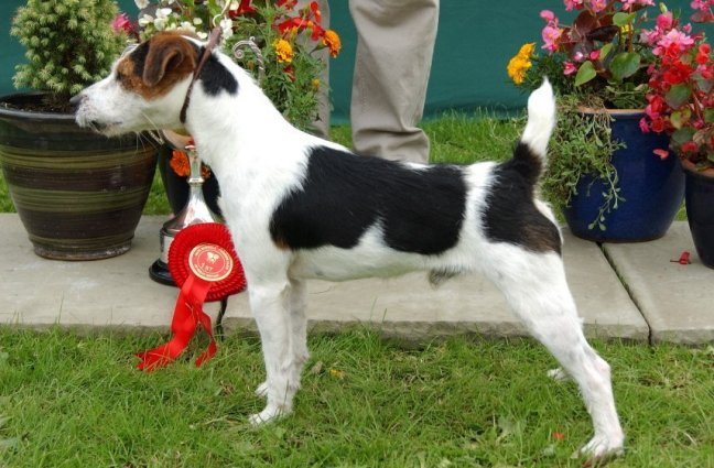 Class 06 Rough/Broken Dog over 1 year | G. Mousley/Anu Makela - Meynell/Sundance Dude