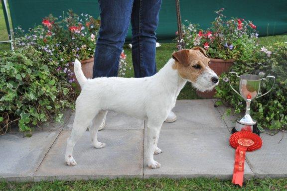Class 9. Bitch Pup (6-12 months) 10-12.5 ins | Steve Parkin - Foxgrove Ruby