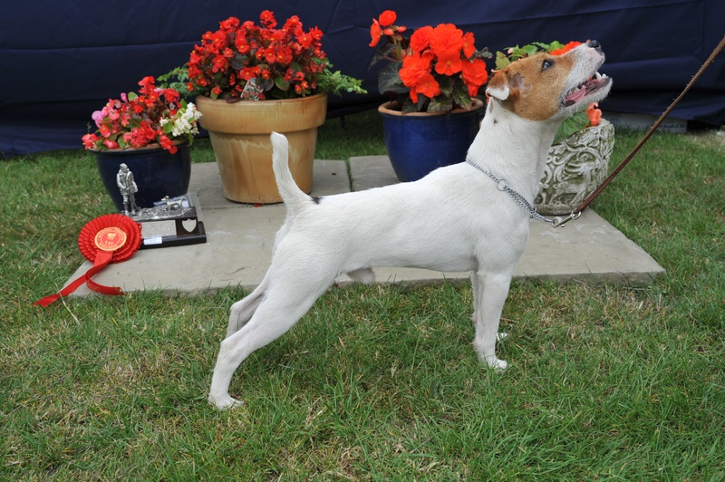 "Class 1 10-12 1/2"" Dog Pup (6-12 months) 
