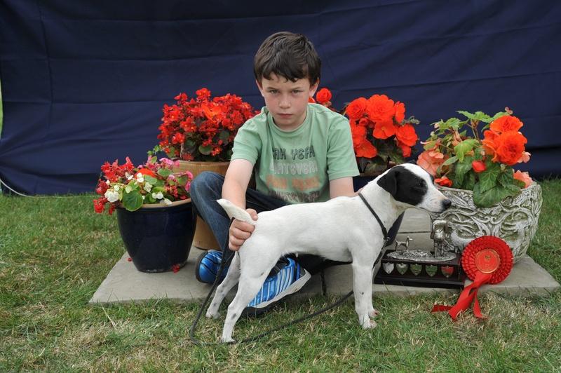 Class 17 Veteran Terrier | S. Allen - Allen's Spinney