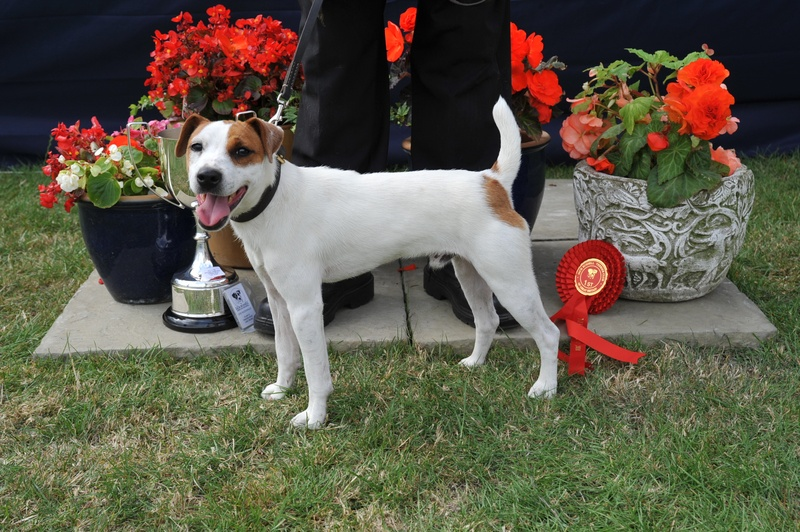 Class 22 Terrier Most like Trump   D. O'Donnahue- Cadella Baggins