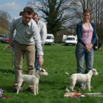 Best Jack Russell (right) & Reserve |