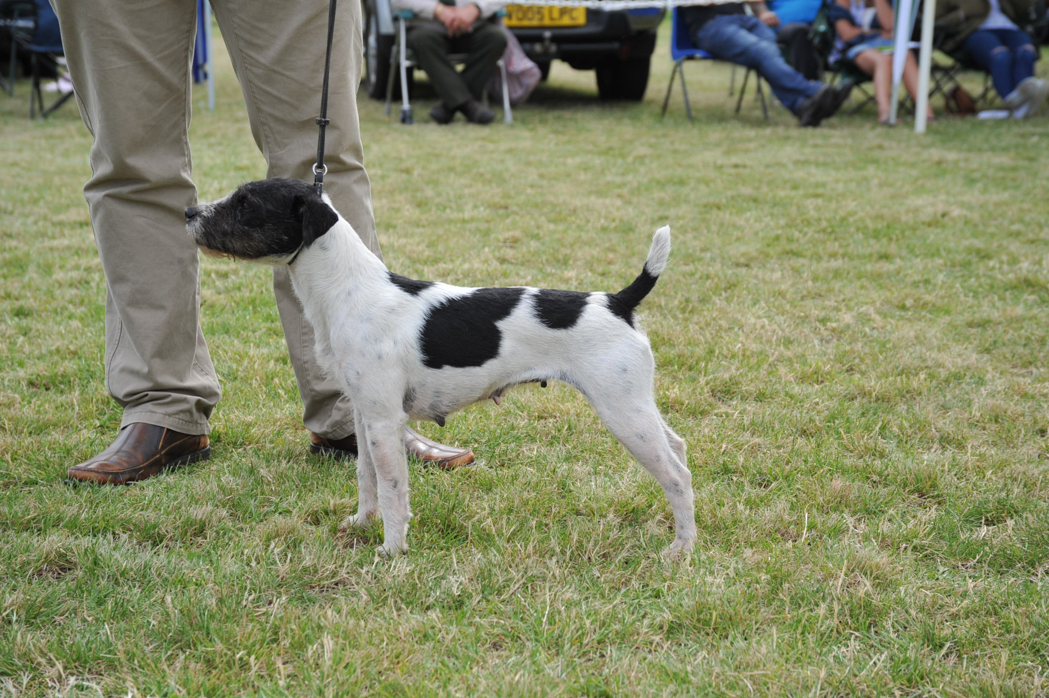 Class 26. Terrier Entered to Fox   Maypole Bow - Joe Smith