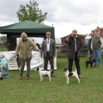 Champion Puppy Tracy Peacock's Dot judge Ian Jolly and reserve Martyn Hulme with Cranky