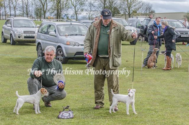 Best puppy Dessie Mackin Finley (right) Reserve Michele Davidson Montrave Moy