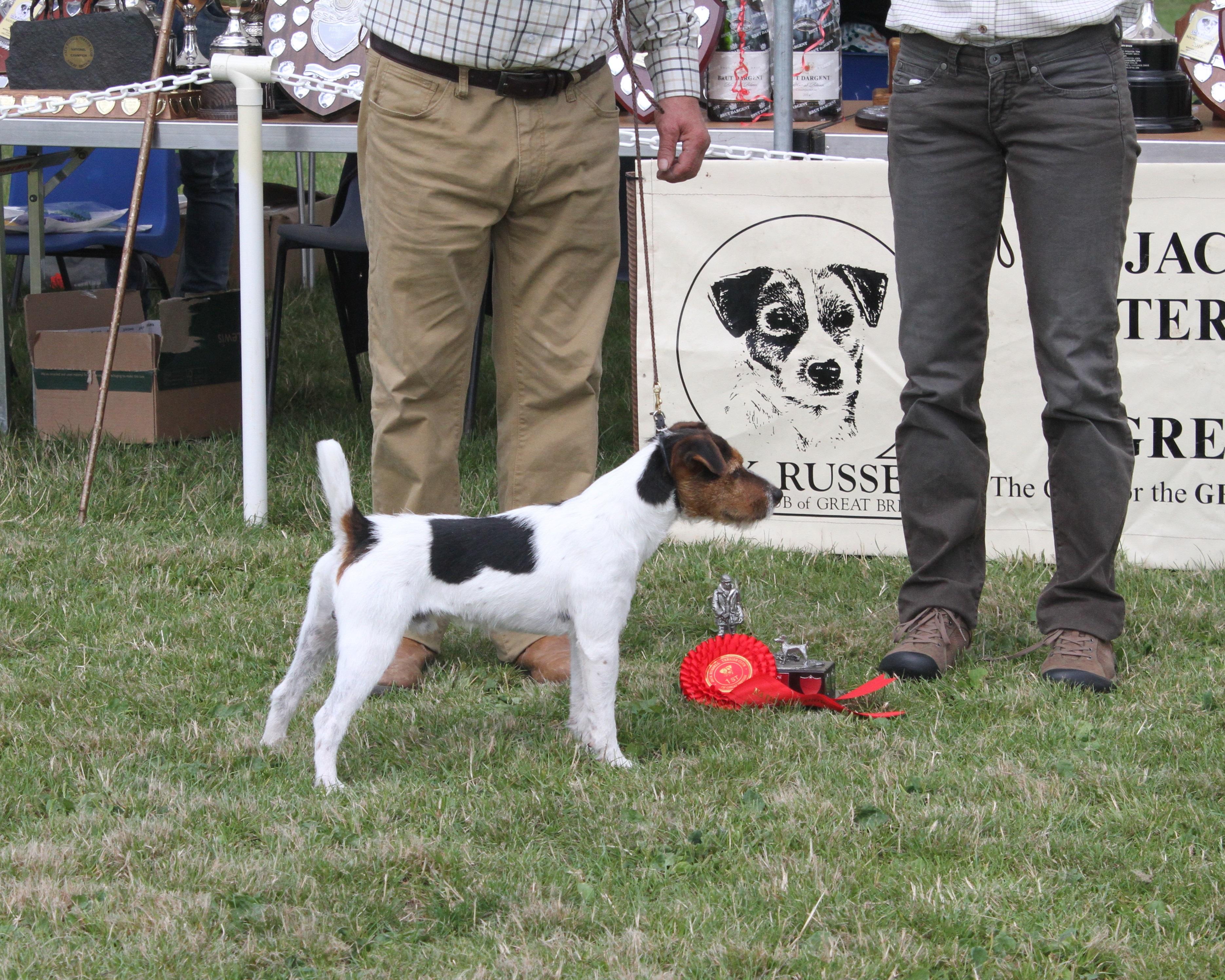 """Class 2. 10""""-12.5"""" Smooth/Rough/Broken coated dog pup 9-12 months. Meynell Sundance Diesel. Greg Mouseley & Anu Makela."""