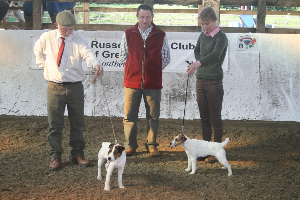 Best Pup Meynell Sundance Wilson, G.Mouseley & A.Makela. Reserve Best Pup Meynell Sundance Jazz, G.Mouseley & A.Makela.