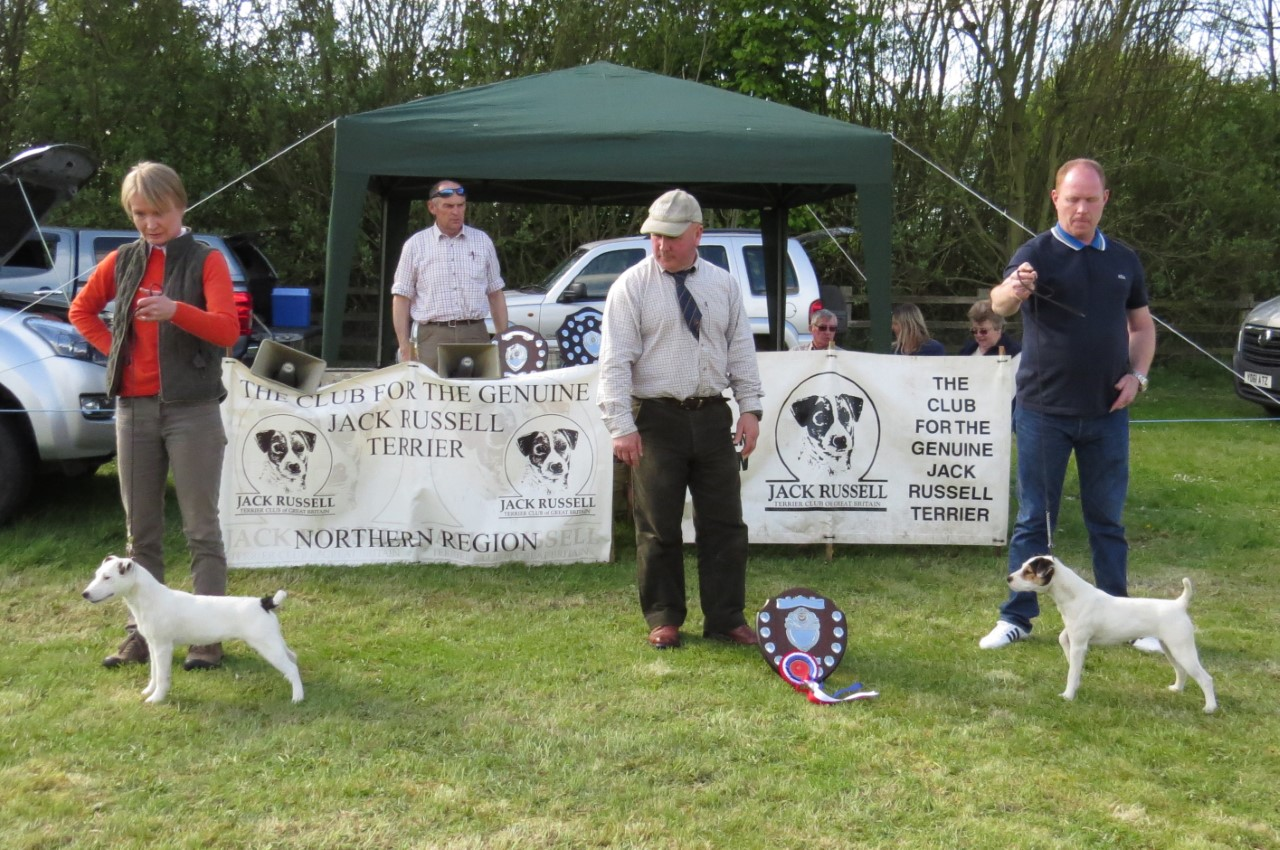 Reserve Puppy, Meynell Sundance Jinx, Anu Makela. Judge Joe Smith. Champion Puppy, Topdraw Shelby, Steve Dalton.