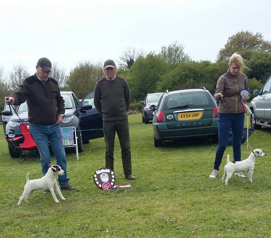 Champion Puppy, Top Draw Creed, S. Dalton. Judge Steve Parkin. Reserve Champion Puppy, Top Draw Ivy, S. Dalton.