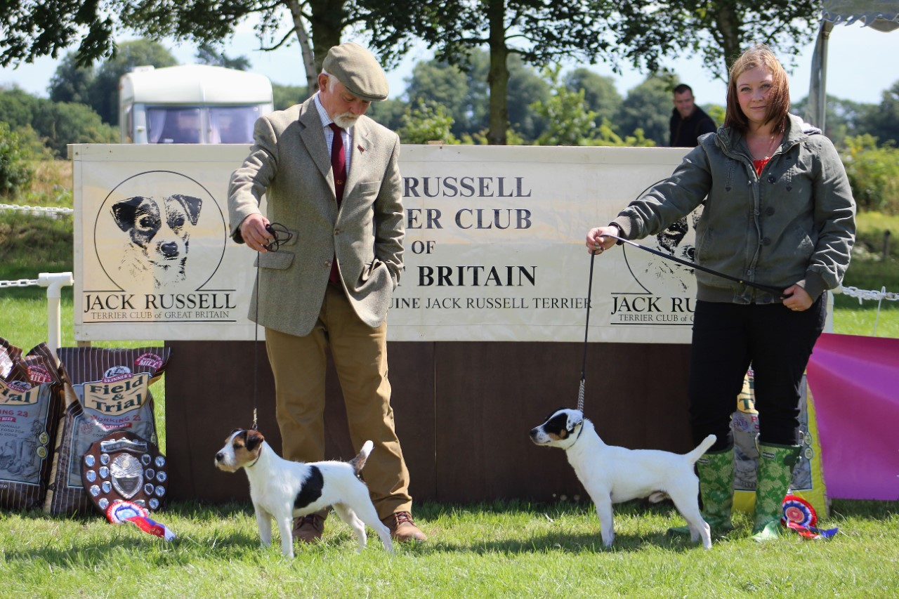 "Class 18 Best 10""-12.5"" Jack Russell Terrier. Reserve Champion, Spinondaw Briar of Meynall-Sundance, G. Mousley & A. Makela. Champion, Friarmoor Ronnie of Huntswood, Craig & Lauren Hickman."